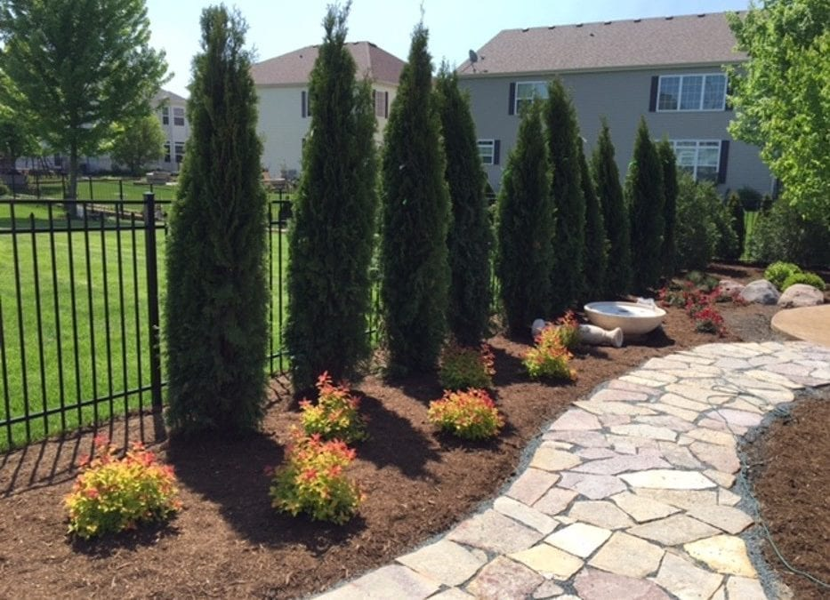 When to Plant Trees in the Chicagoland Area