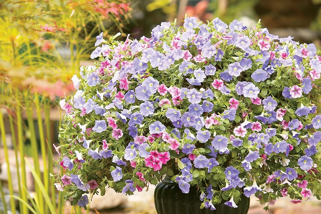 Pink and Purple Wave Petunia Planter