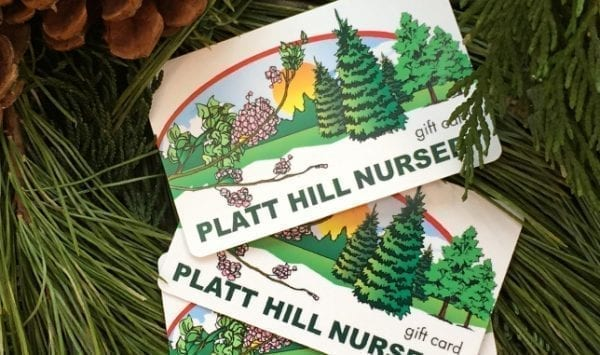 Platt Hill Nursery Gift Cards in evergreen