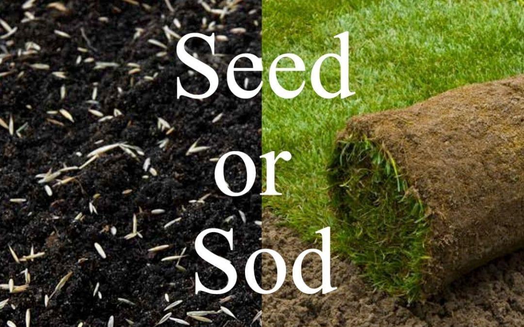 Seed or SOD