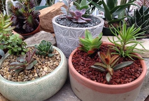 succulent planter, indoor plants, houseplants