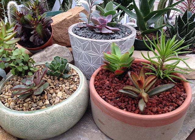 succulent planter workshop options
