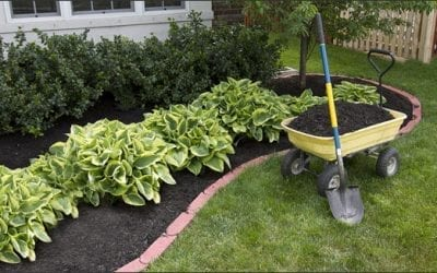 Why should we use Mulch
