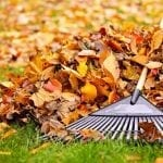 fall cleanup, fall lawn services
