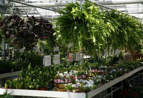houseplants near me, houseplant care
