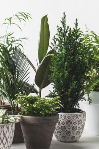 houseplants for clean air