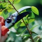 How-to Prune trees and shrubs