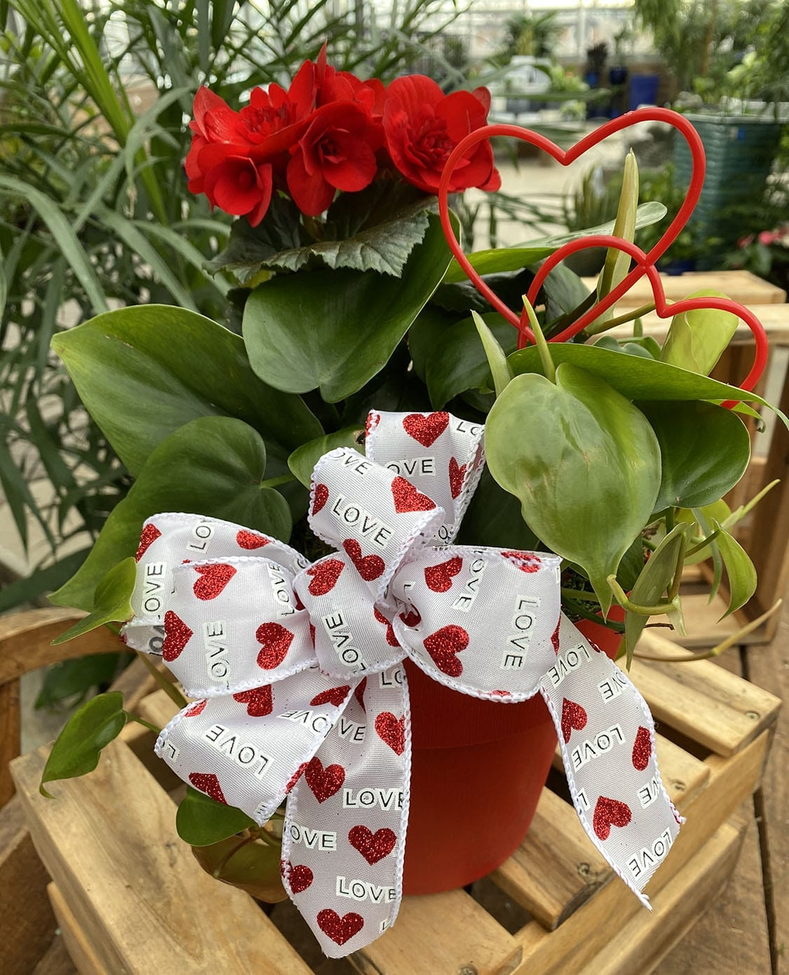 kid's activity, valentine's day gift, blooming plant
