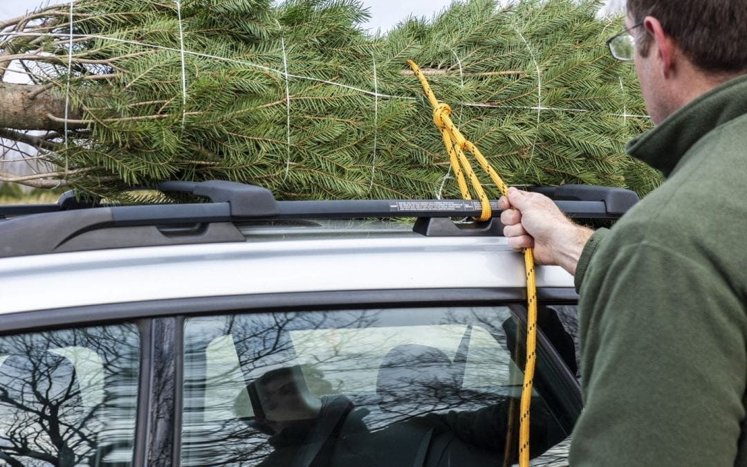Loading fresh cut Christmas tree