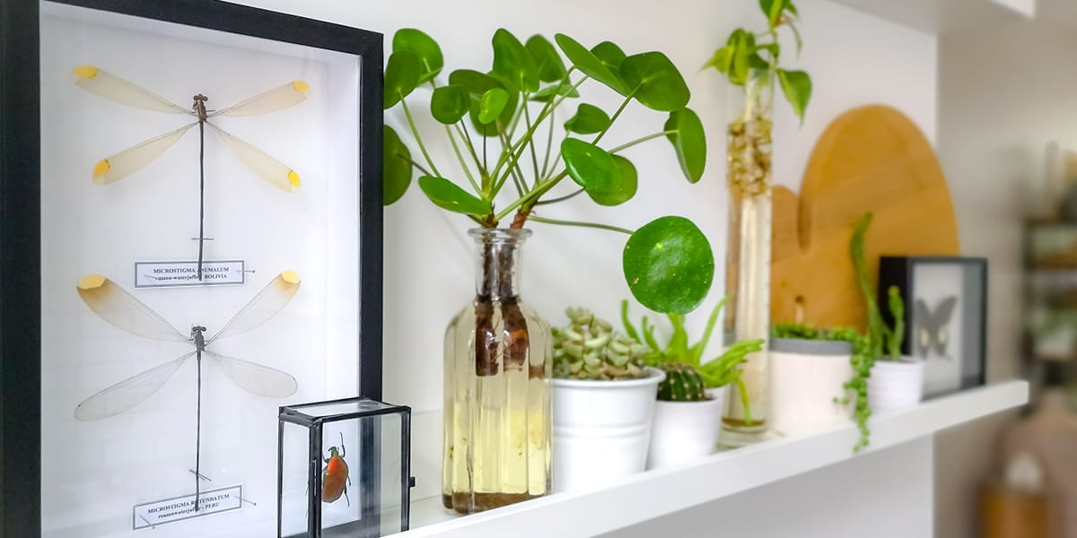Houseplants As Living Decor Decorate With Plants Platt Hill Nursery