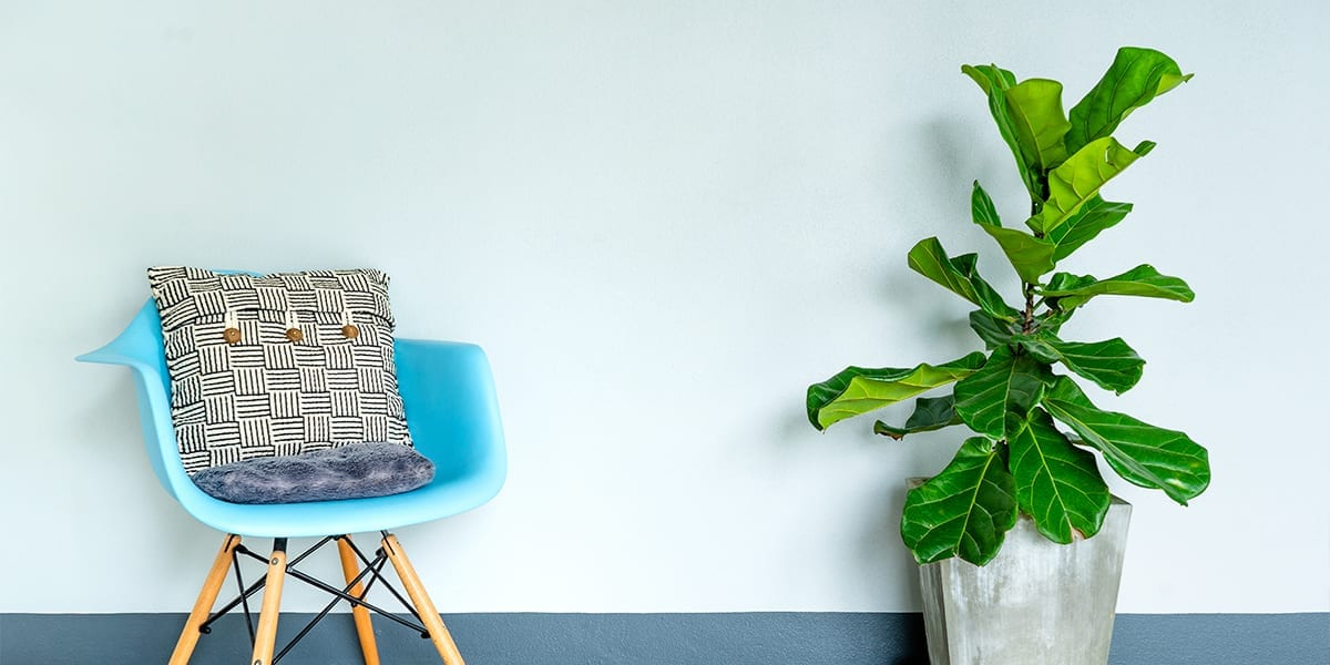 houseplants-as-living-decor-fiddle-leaf-fig-and-chair