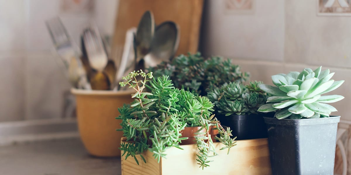 houseplants-as-living-decor-succulents-in-kitchen