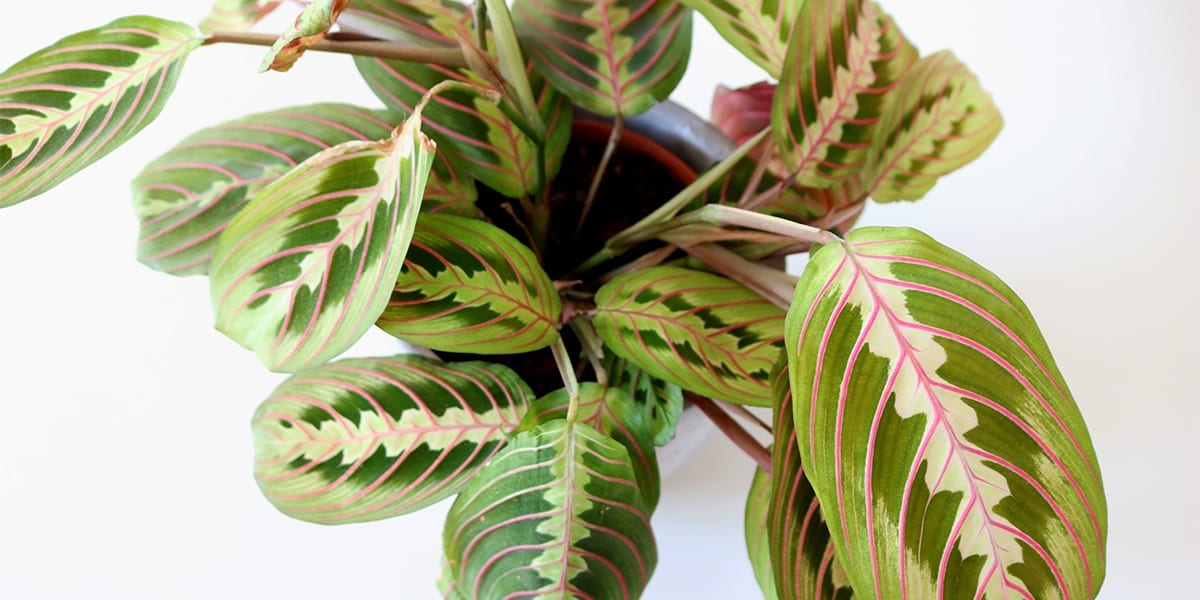 new-year-new-houseplants-pink-and-white-orchids