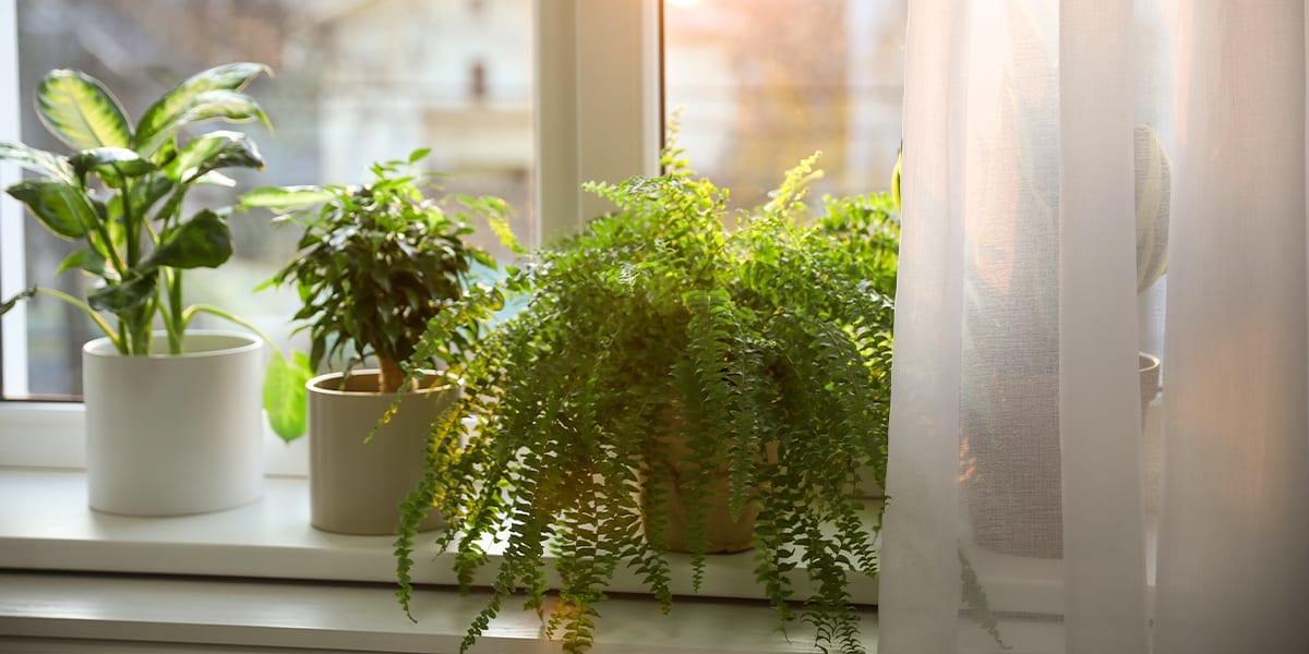terracotta-vs-ceramic-which-is-better-fern-on-windowsill