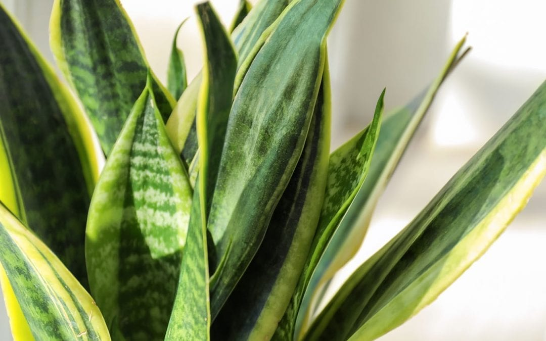 5 Houseplants for Beginners