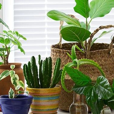 Houseplants on a window sill