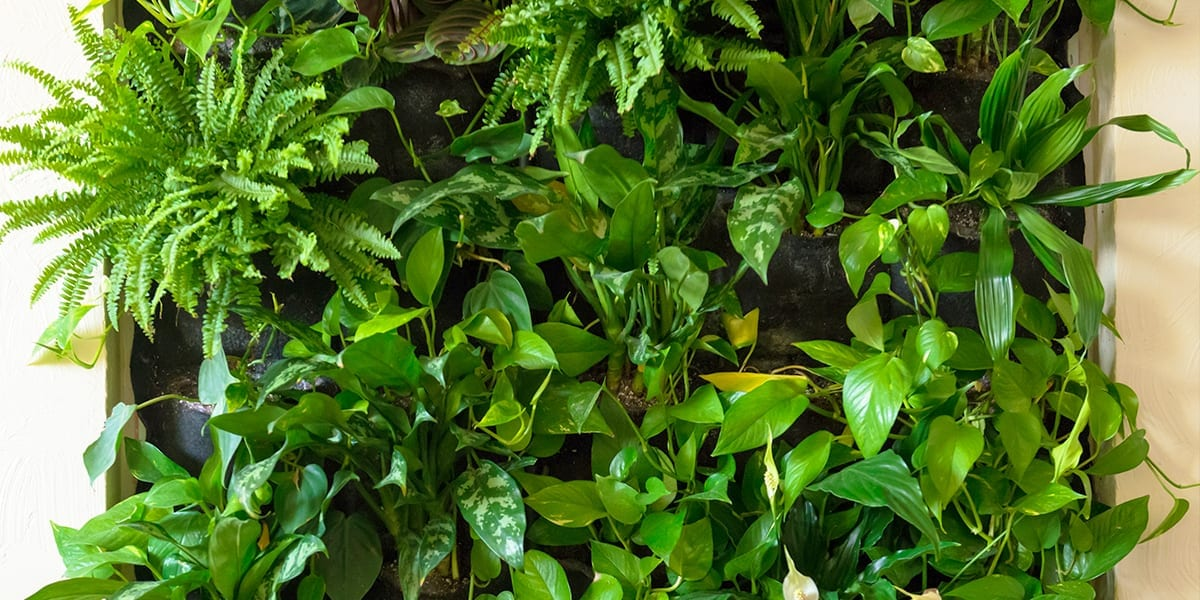 creating-a-vertical-garden-living-wall-straight-on