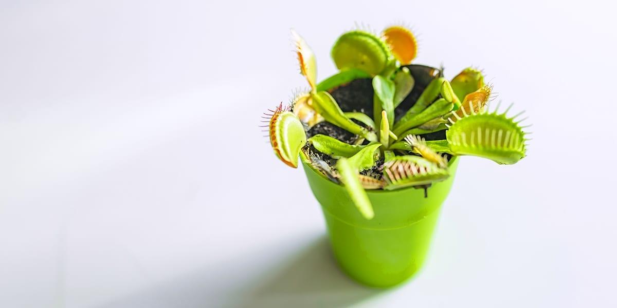 5 Cool Houseplants Kids Will Love Platt Hill Nursery
