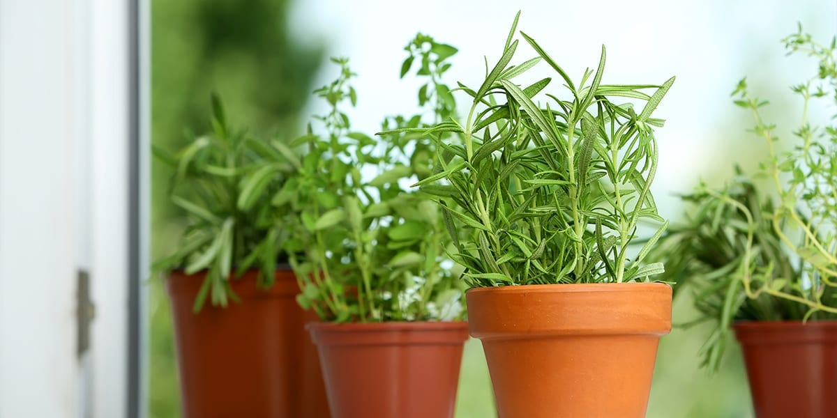 kid-friendly-edible-gardening-herb-plants-in-windowsill