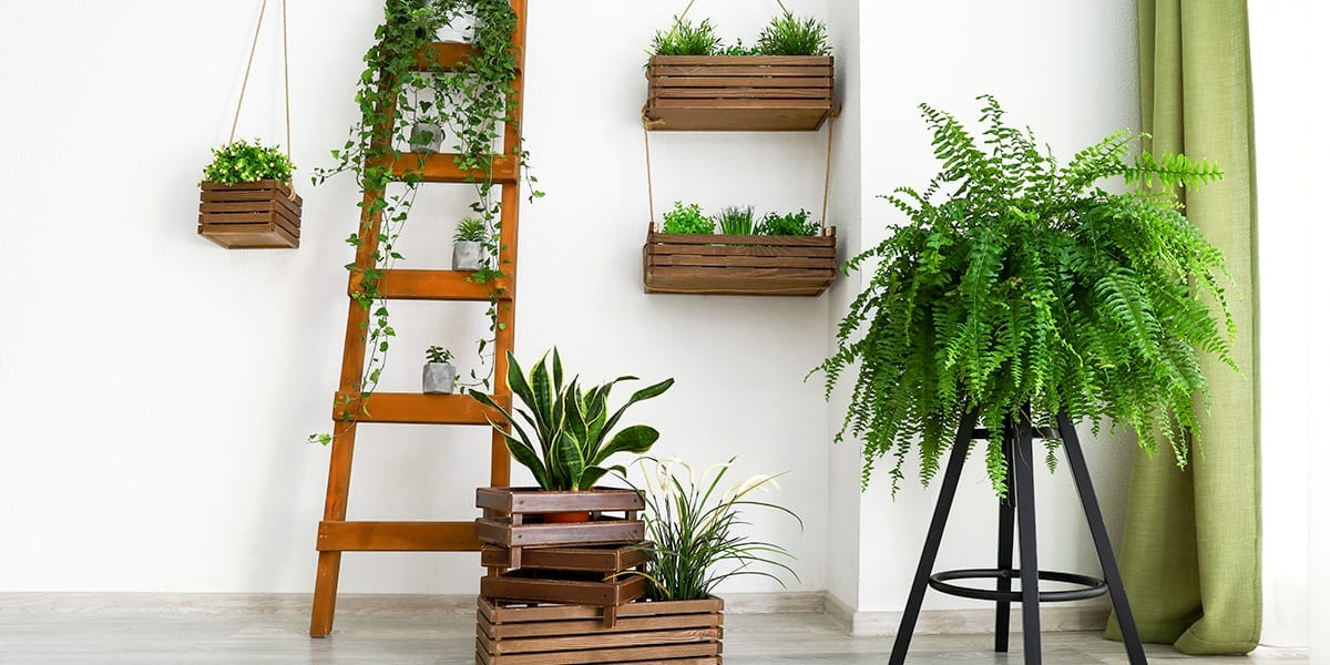 maximize-space-window-houseplants-plant-stand-and-ladder-shelves