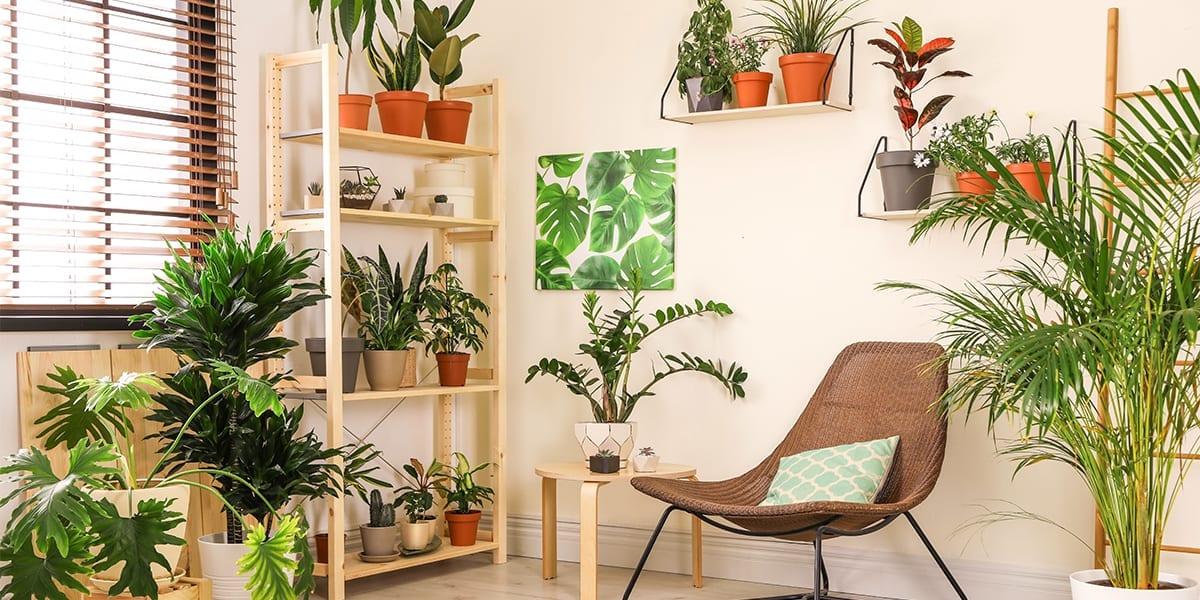 maximize-space-window-houseplants-room-with-houseplants-shelves-beside-window