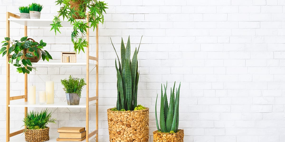 maximize-space-window-houseplants-shelves-and-stands-white-brick-wall