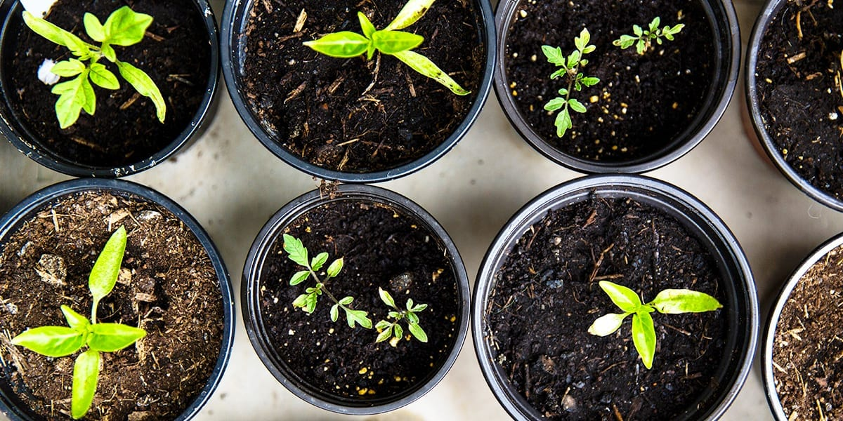 seed-starting-guide-seedlings-from-above-markus-spiske