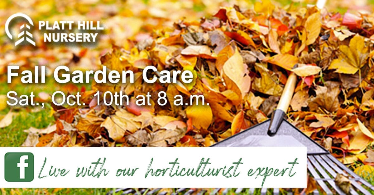 Fall Garden Clean up and Care