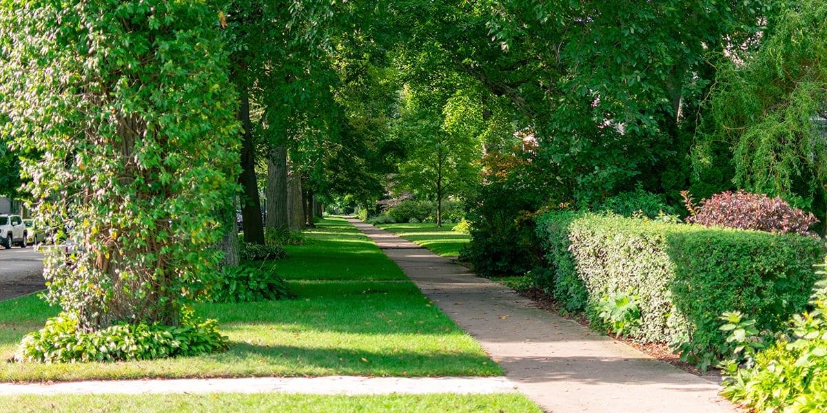 advantages-of-big-trees-old-neighborhood-large-trees