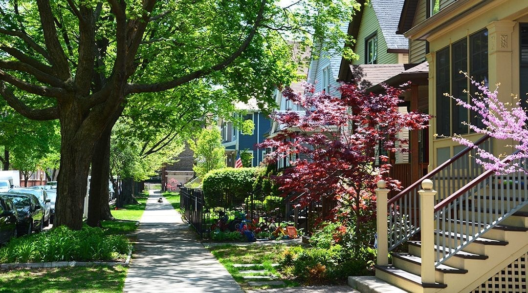 advantages-of-big-trees-old-suburb-american-trees-feature