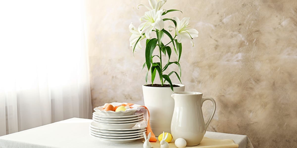 easter-lily-care-easter-lily-in-planter-eggs-rabbits