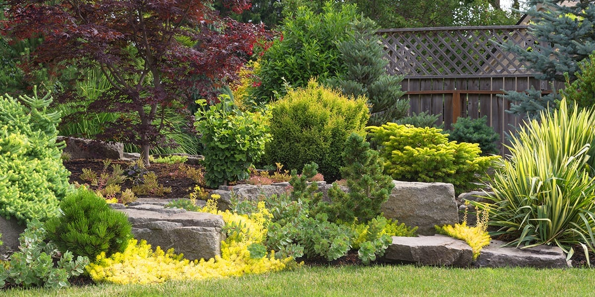 landscaping-checklist-evergreens-and-stones-backyard