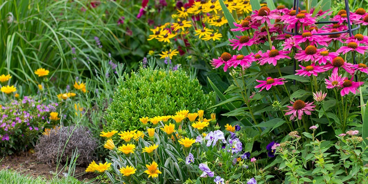 landscaping-checklist-landcsaping-flowers-close-up