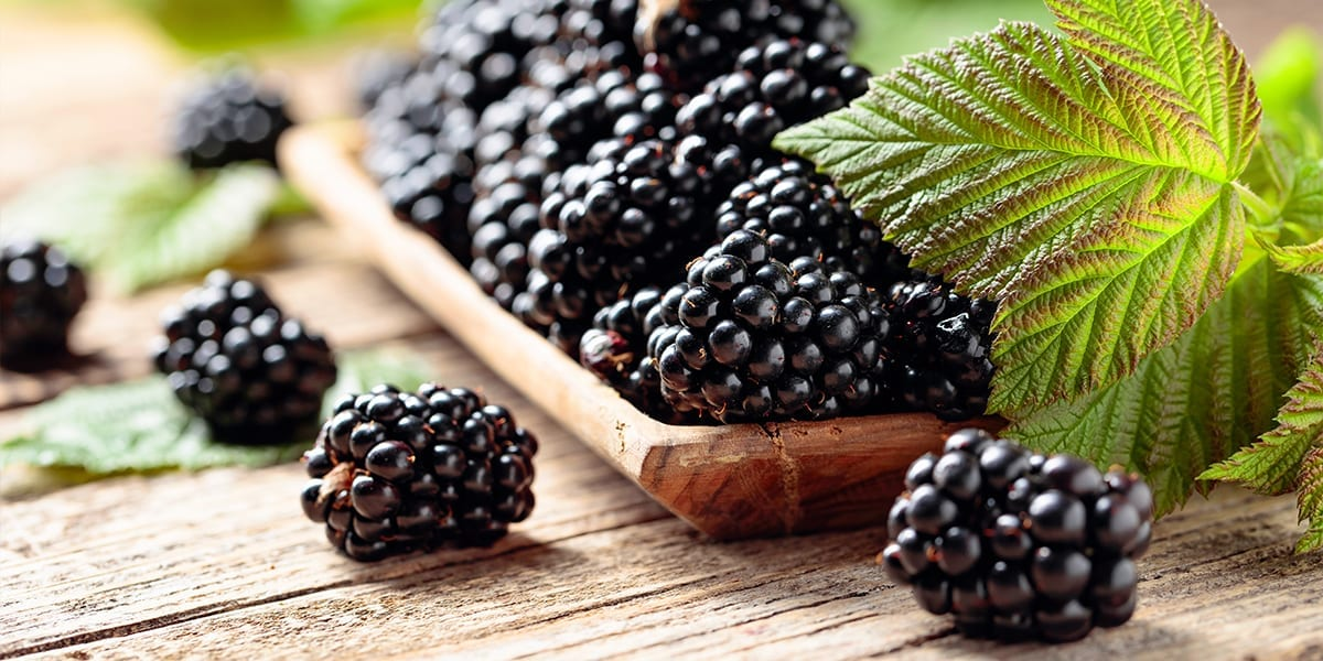 berry-shrubs-blackberries