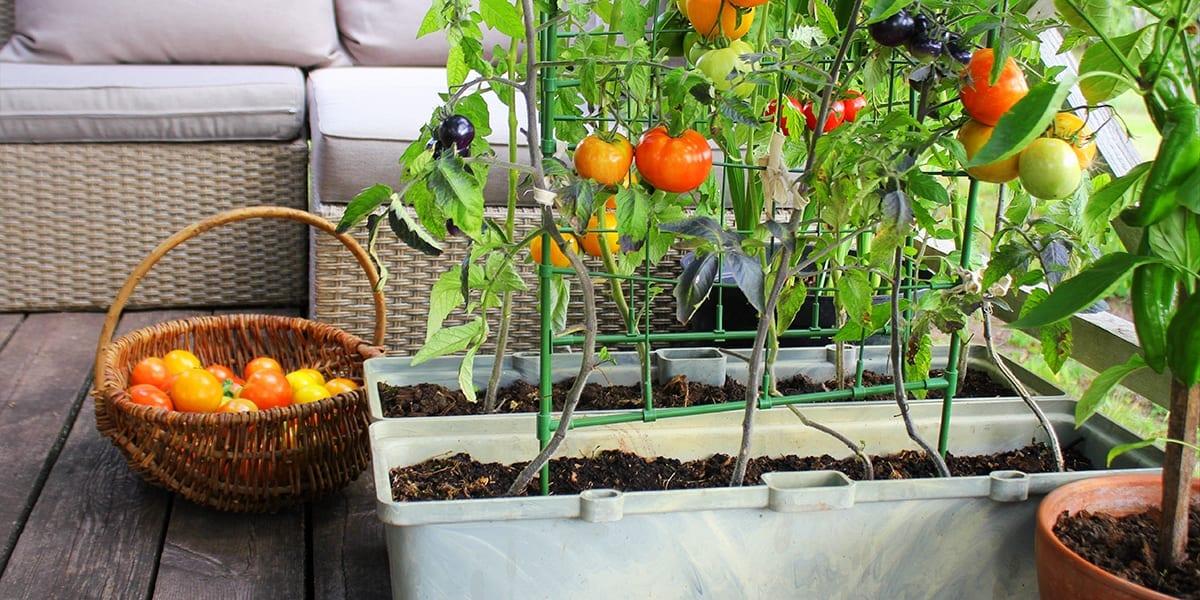 outdoor-kitchen-edible-planters-tomato-planters