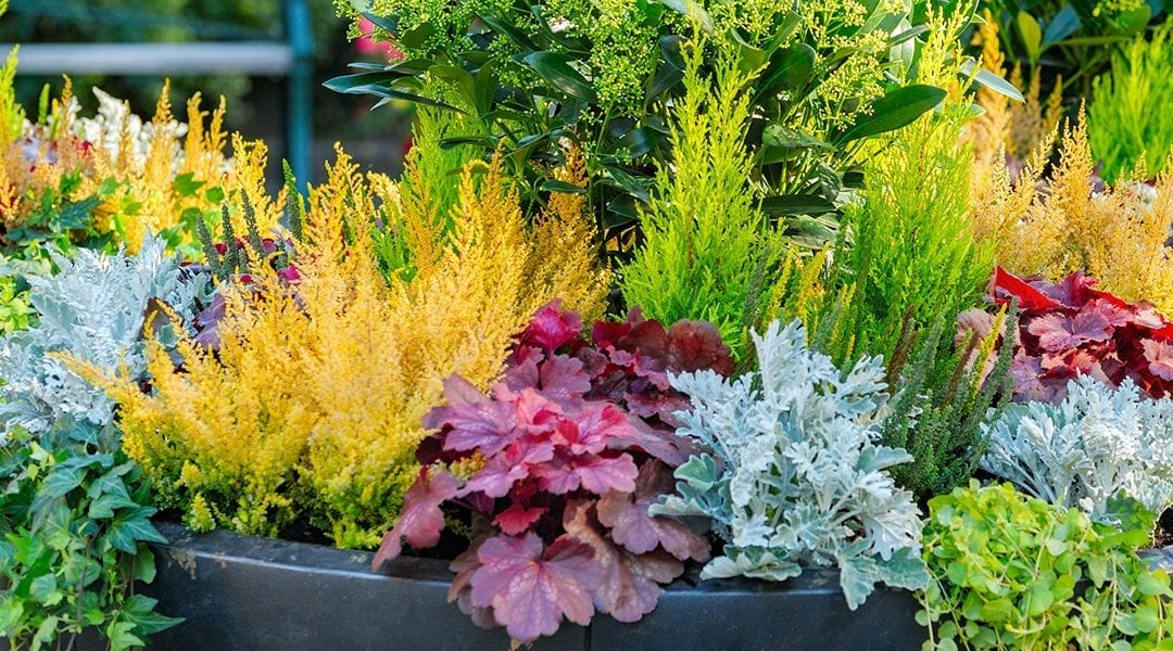 Design Essentials for Container Gardens