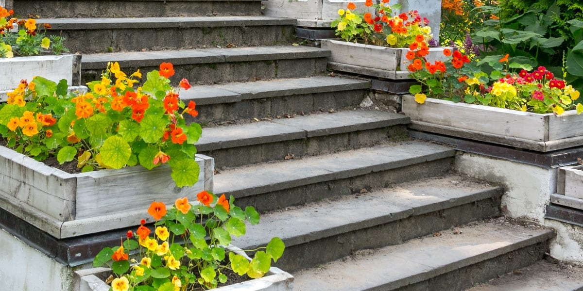 design-essentials-container-gardening-nasturtium-container-staircase