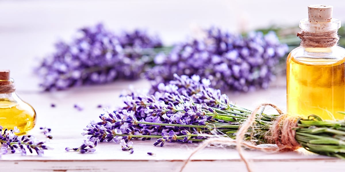 garden-plants-soothing-stress-lavender