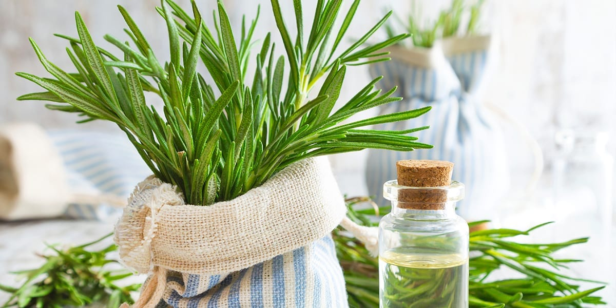 garden-plants-soothing-stress-rosemary