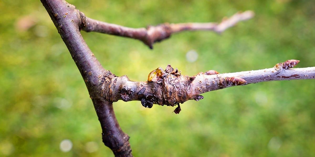 smart-ways-to-prevent-pests-disease-branch