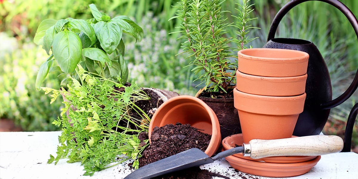 smart-ways-to-prevent-pests-disease-planting-companion-herbs