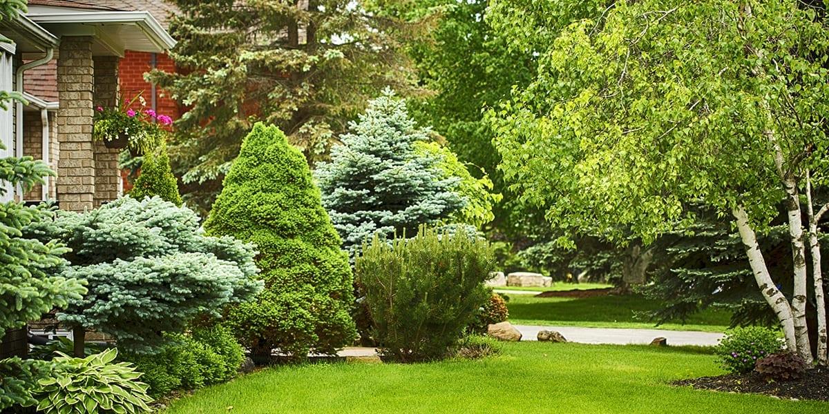 cool-shade-trees-many-trees-birch-platt-hill