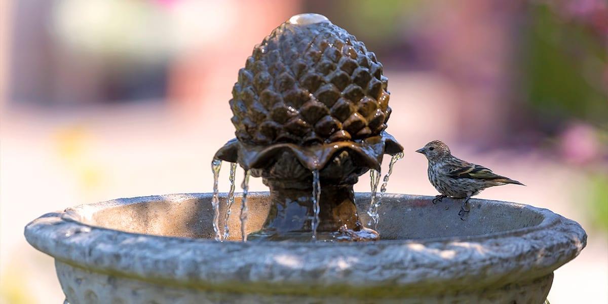 platt-hill-garden-water-features-bird-bath