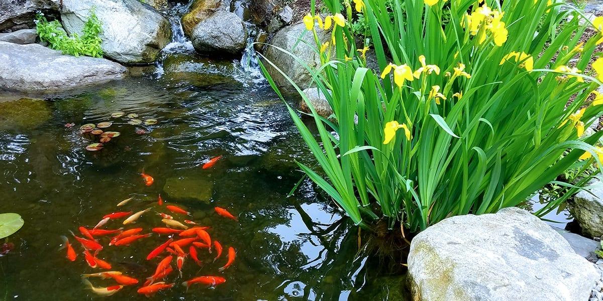 platt-hill-garden-water-features-fish-pond