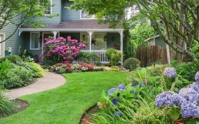 Shrubs and Perennials for a Colorful Summer Landscape