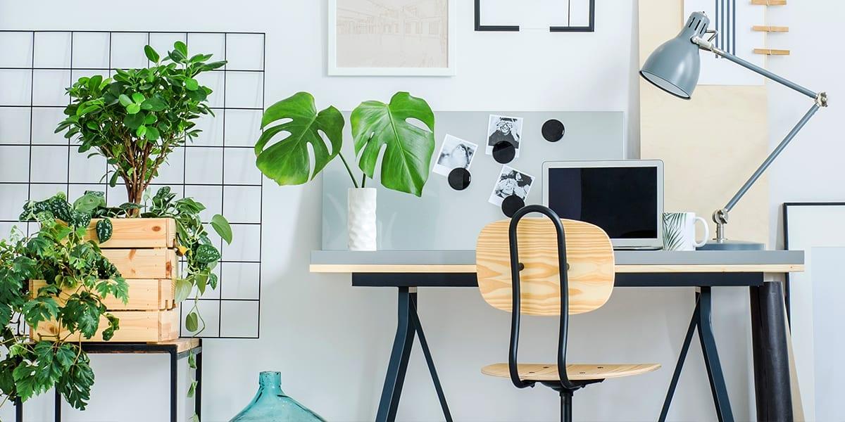 platt-hill-houseplants-help-you-study-desk-workspace-monstera