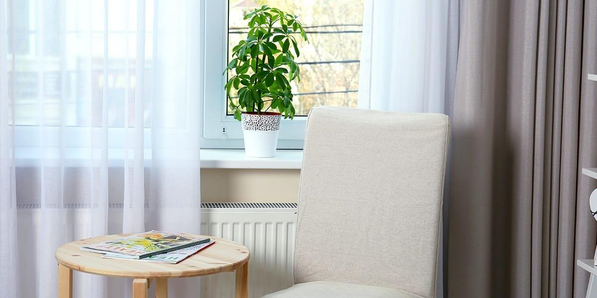 platt-hill-houseplants-help-you-study-schefflera