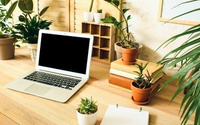 How Houseplants Can Help You Study