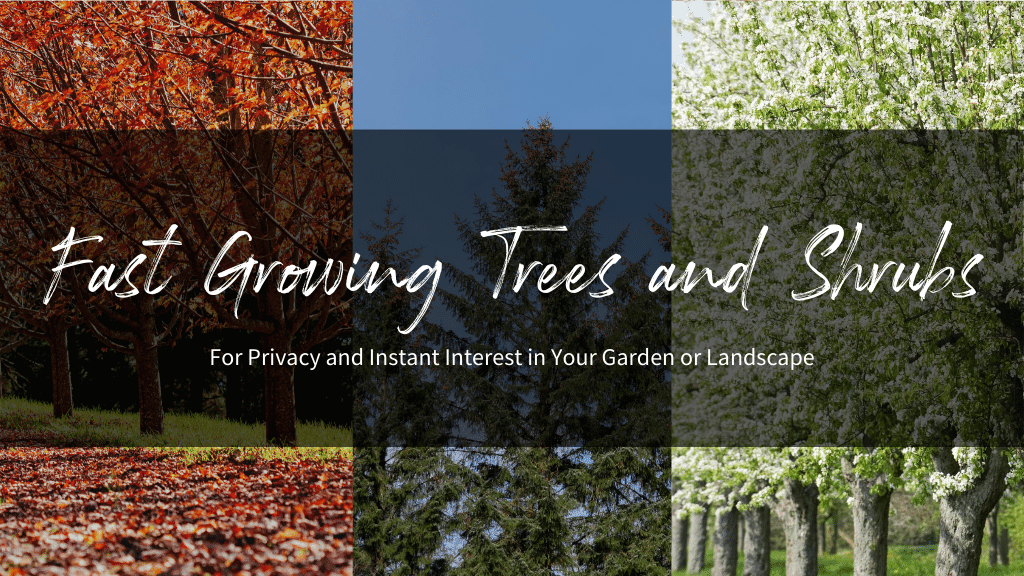 Fast Growing Trees and Shrubs for Your Garden