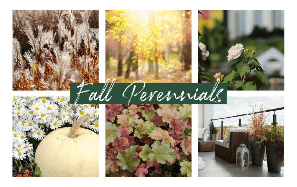 Collage image of Fall Plants - Perennials